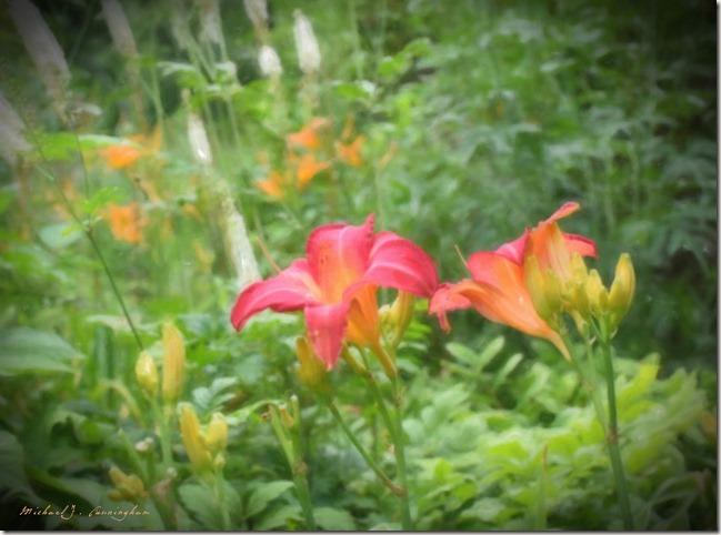 Schorr-Flowers