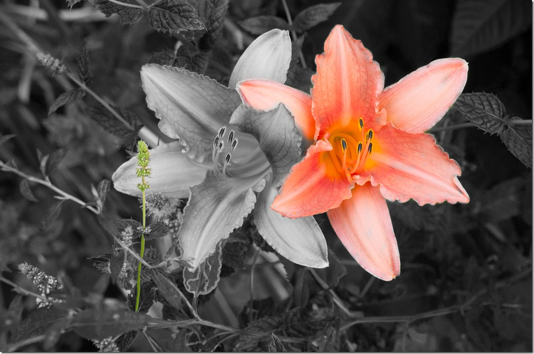 Cedar St flowers L1003137-1