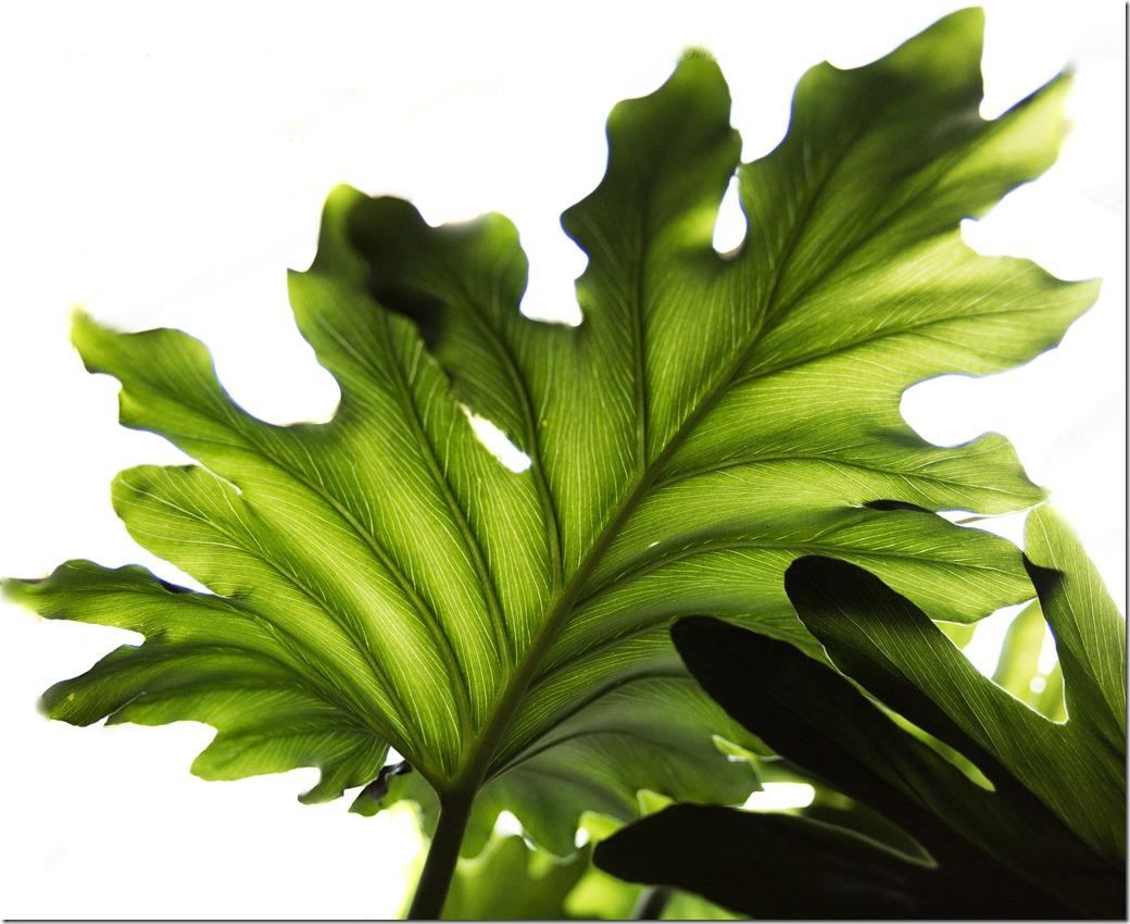 Leaves_DSC9075-1