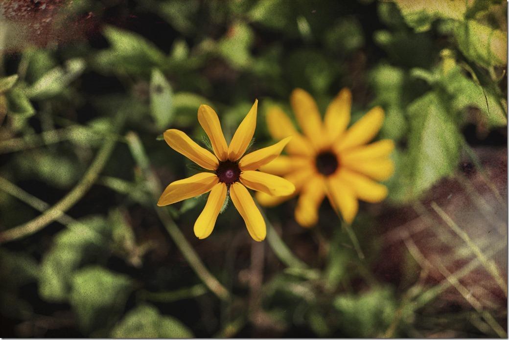 Yellow flower SDQH1214_thumb[1]