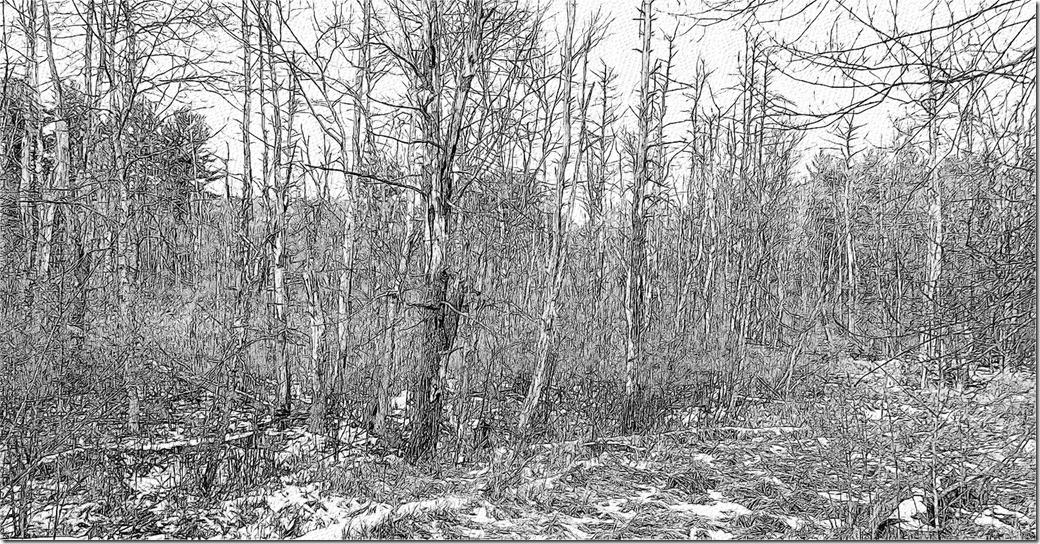 Trees 2 L1000081-1