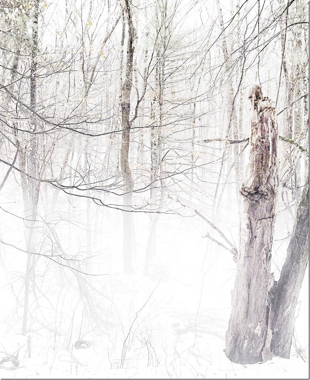 Snow Scene SDQH0052