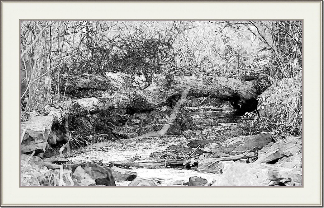 Stream in the Woods DSC_2581-1