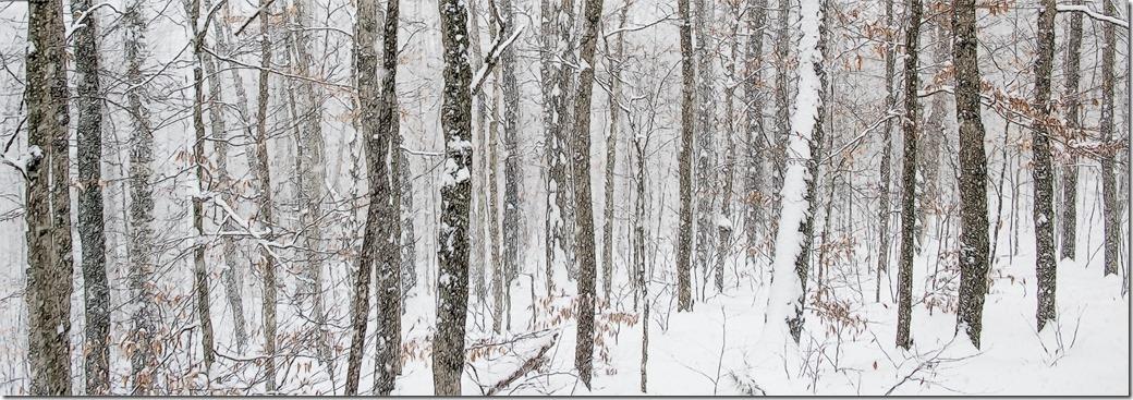 Trees 2 New Hampshire DSC_2725-1
