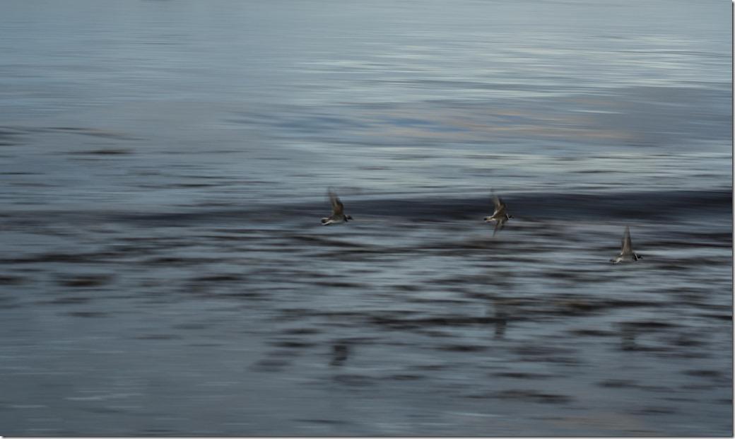 Birds at Dawn Reflection 2-1
