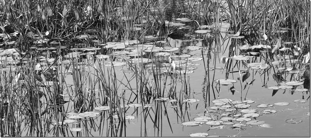 Reeds_ with Noise reduction BW SDI2988