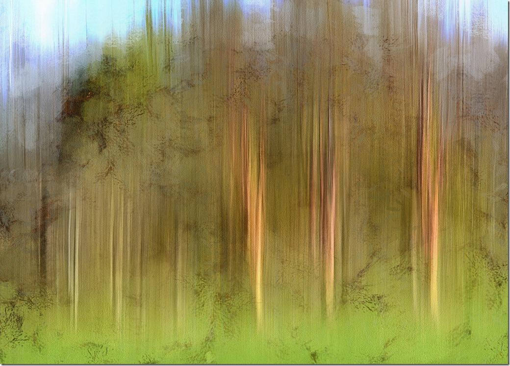 Streaky Trees DSC_3217_DAP_Portraitist4
