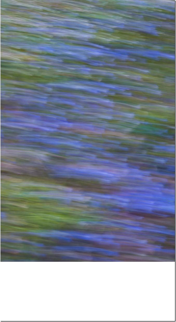 Wave of Color DSC_3186-1