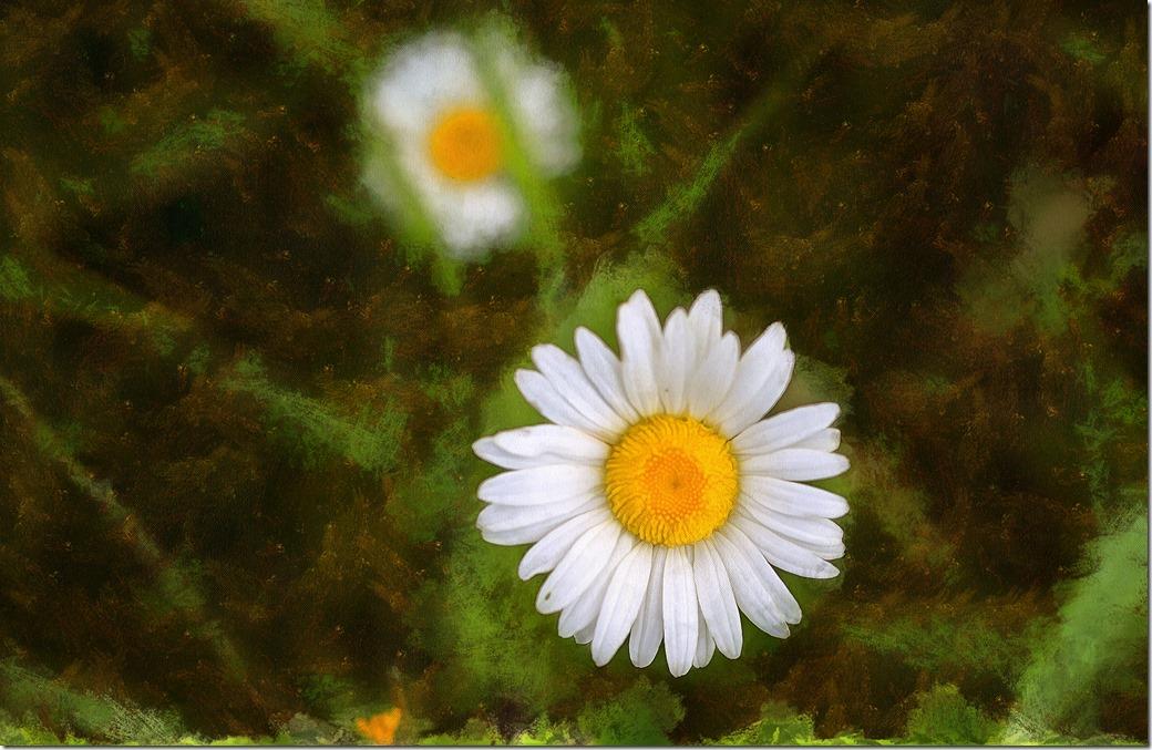 Flower DSC00849-1_DAP_Portraitist4