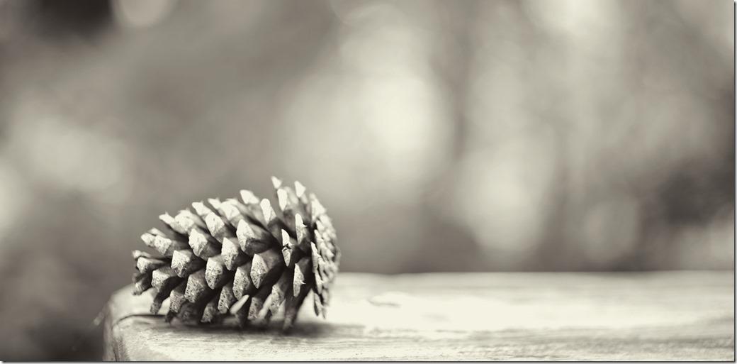 ine-Cone-DSC00816_thumb1
