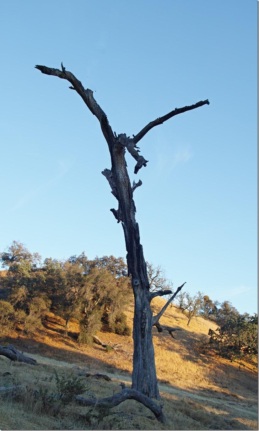 Crucified Tree modified SDQH0151