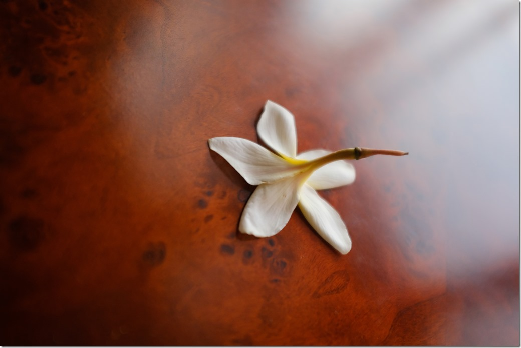 Flower Petal DSCF0849