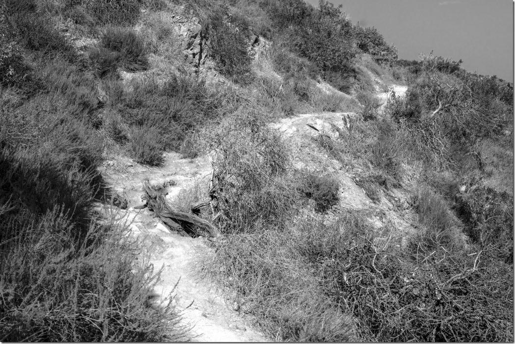 Trail Mix DSC02152