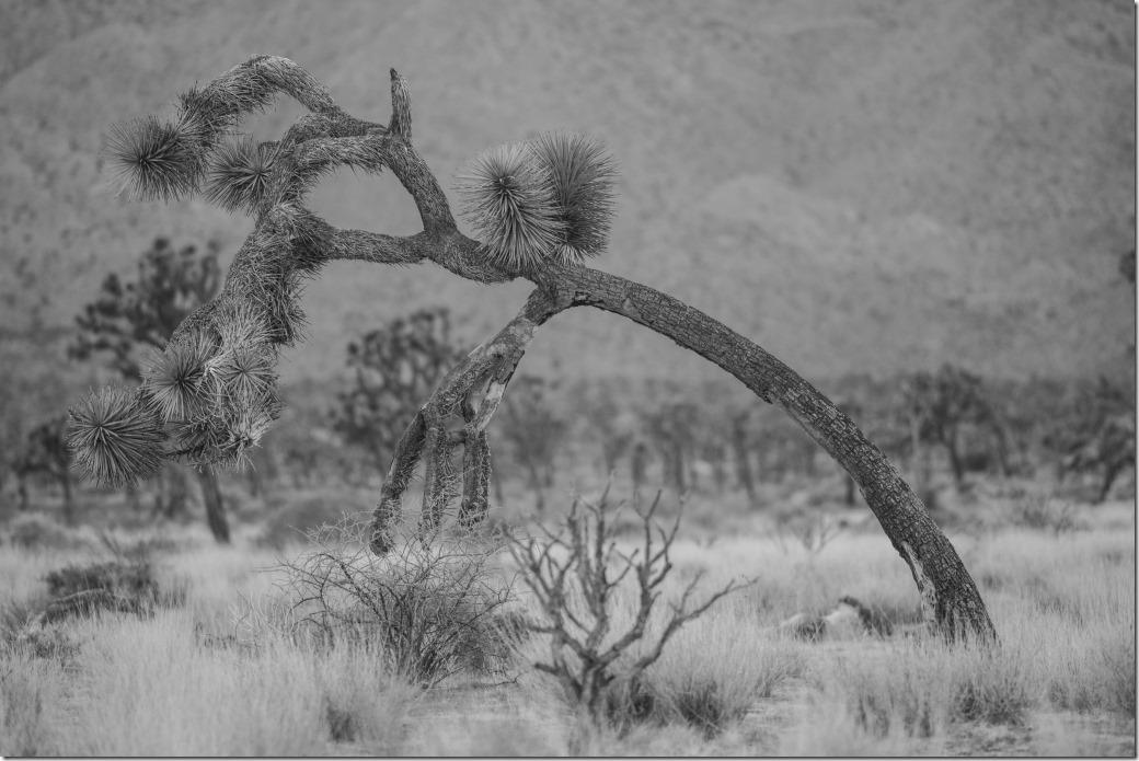 Tree DSC_3835