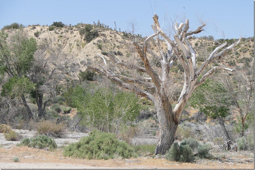 Tree P1000838