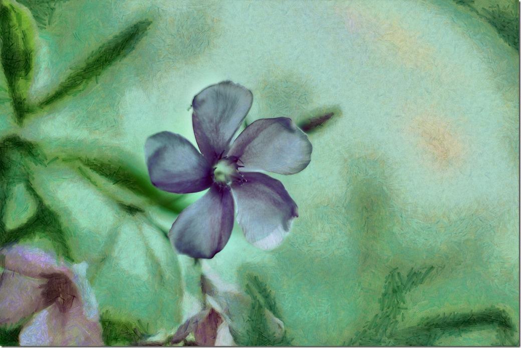 Flower DSC00077_DAP_Manet_6