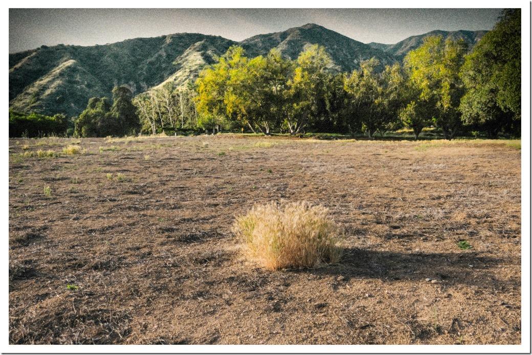 Last Grass DSCF0693