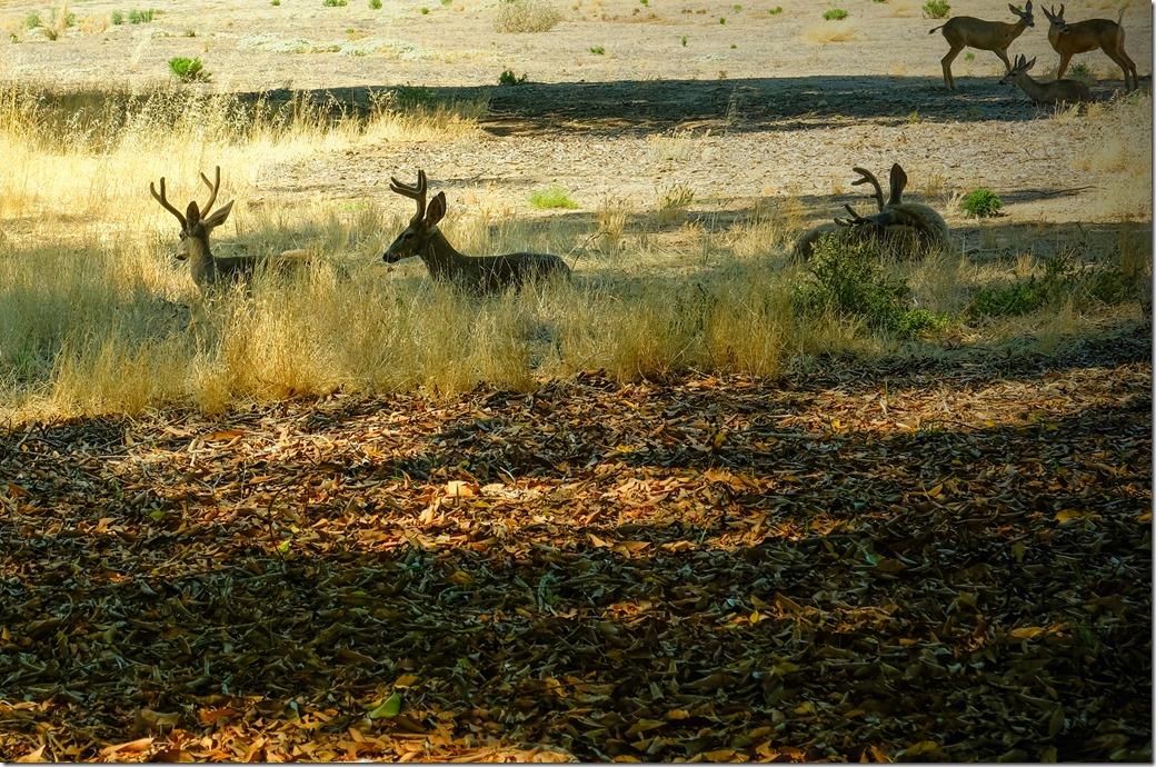 deer DSCF0810