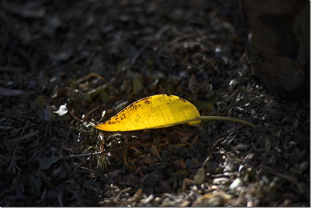 Leaf_DSC4566