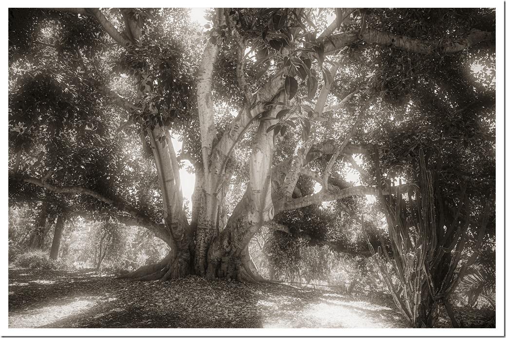 Tree BW XH1DSCF0840 - Copy