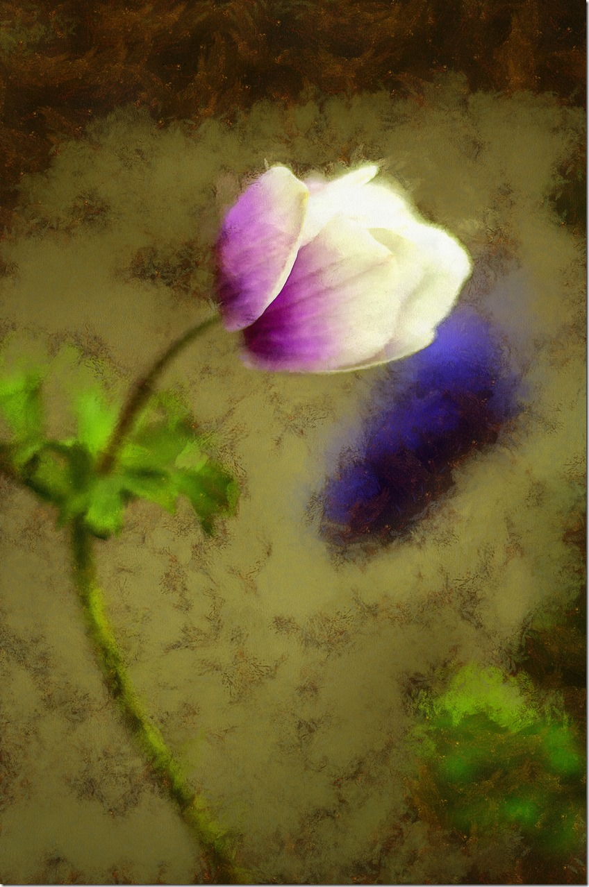 Flower IMGP9422_DAP_Portraitist4