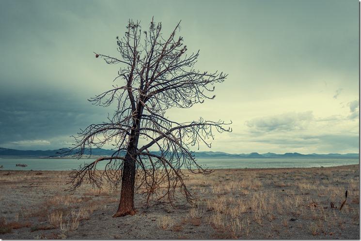 Tree L1020358