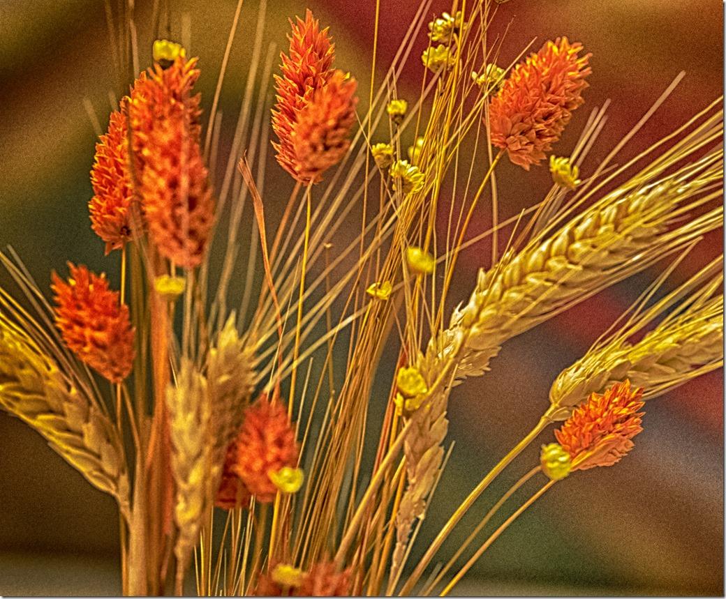Wheat 2 L1020755